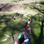 AR Trail meadow