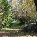 Fall colors at Mother Lode River Center